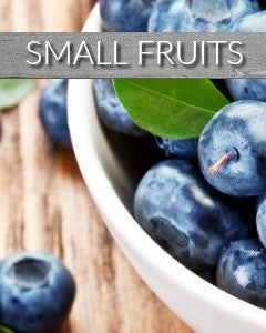 Buy Small Fruits Online