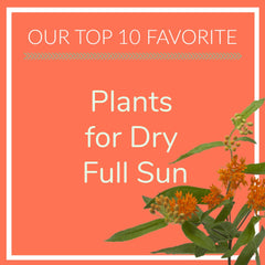 Plants for Dry Full Sun