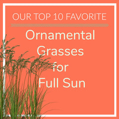 Ornamental Grasses for Full Sun
