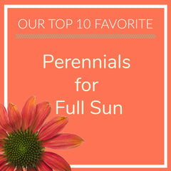 Perennials for Full Sun