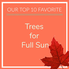 Trees for Full Sun
