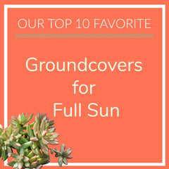 Groundcovers for Full Sun