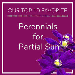 Perennials for Partial Sun