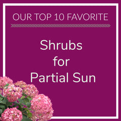 Shrubs for Partial Sun