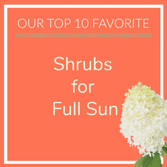 Shrubs for Full Sun