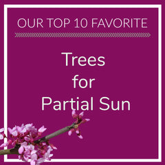 Trees for Partial Sun
