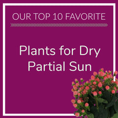 Plants for Dry Partial Sun