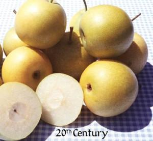 Pear-Asian 'Twentieth Century' - #7