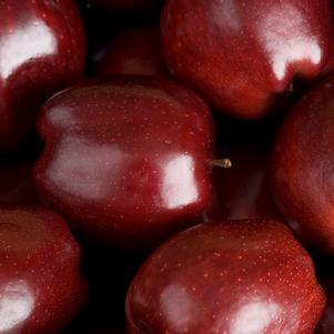 Malus X 'Red Delicious'-#7 Container<br/>Red Delicious Apple