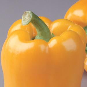 Pepper 'Golden Bell'-#1 Container<br/>Golden Bell Sweet Pepper