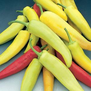 Pepper 'Hot Banana'-#1 Container<br/>Hot Banana Hot Pepper