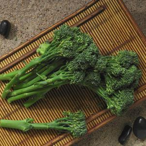Broccolini 'Aspabroc'-#1 Container<br/>Aspabroc Broccolini