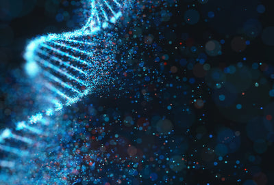 Methylation - What Is It?
