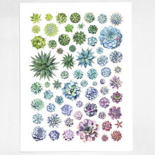 Load image into Gallery viewer, Succulent Rosettes Poster