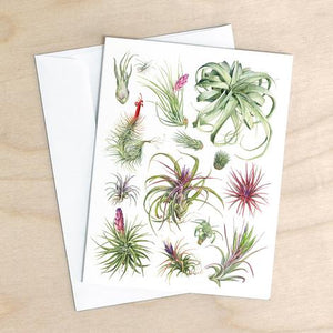 Tillandsia Air Plant Card