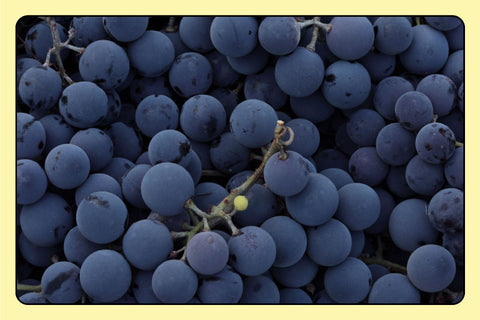 Full-bleed image of grapes fresh from the vine.