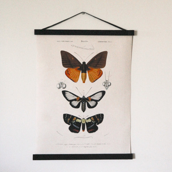 Vintage Moth Canvas Hanging Chart