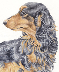 Dachshund Print, Long Haired Black and Tan Dachshund Watercolour
