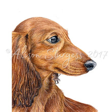 Load image into Gallery viewer, Dachshund Print, Long Haired Red Dachshund Watercolour