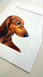 Dachshund Print, Long Haired Red Dachshund Watercolour