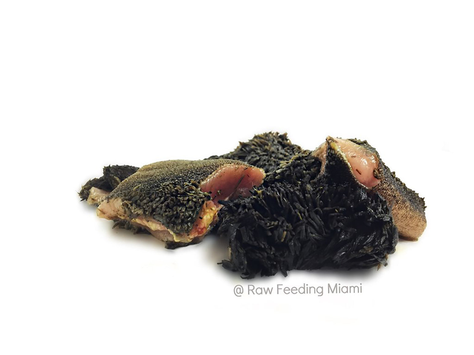 exotic-raw-pet-food-bison-green-tripe