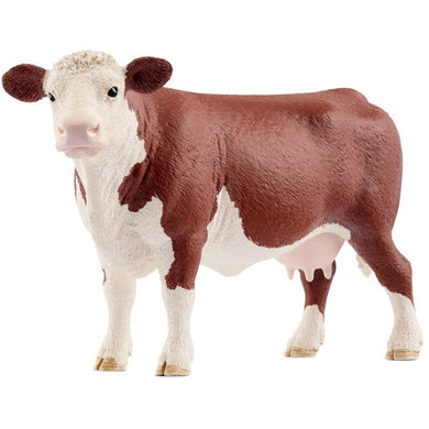 SC Hereford Cow
