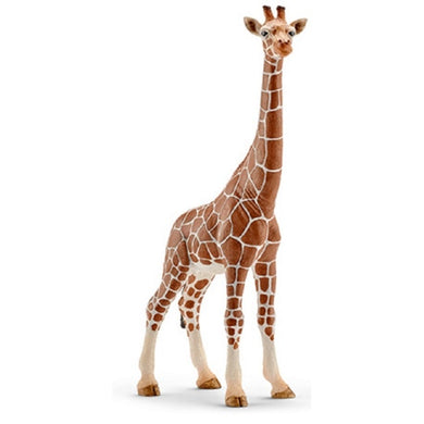 SC Giraffe Female