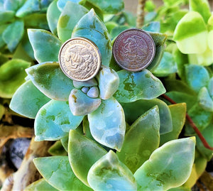 10 Pesos Mexican Coin Pair of stud earrings