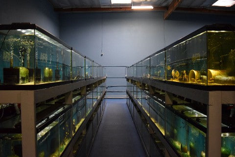Looking down one of the aisles at Aquarium Fish Depot