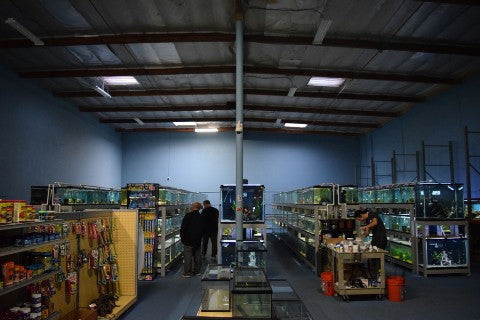 The warehouse at Aquarium Fish Depot