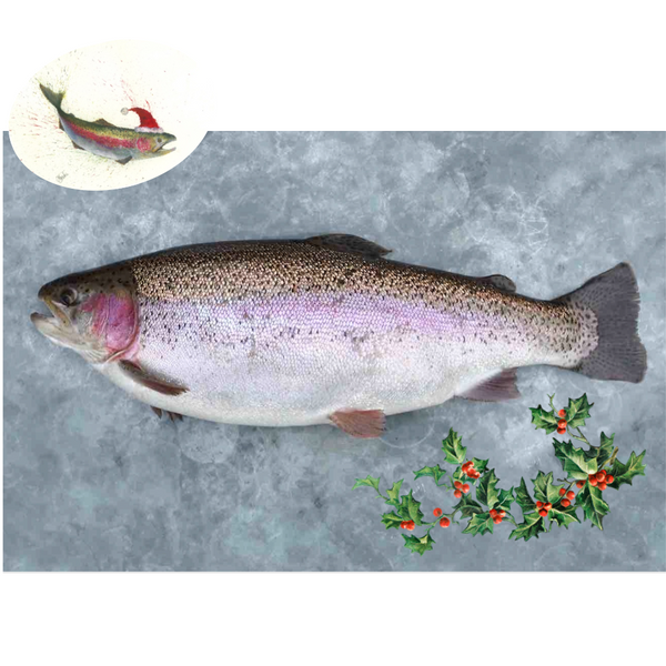 'The Gleamer' - A large ChalkStream® Trout CHRISTMAS DELIVERY