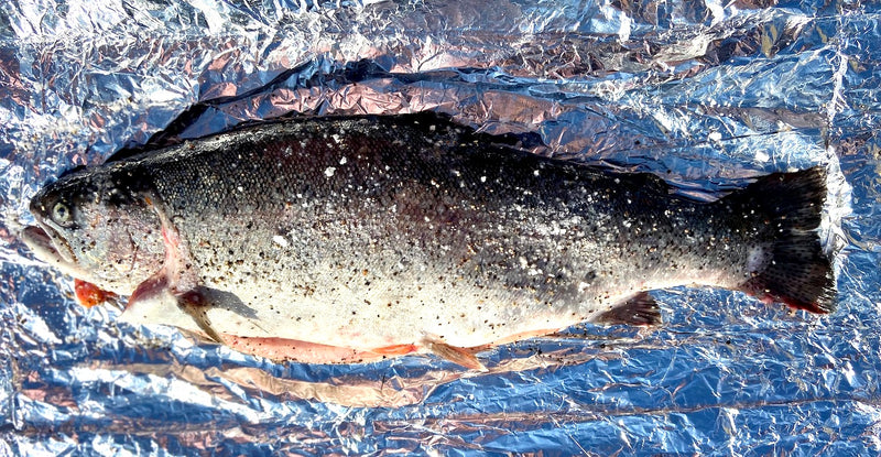 'The Gleamer' - A large ChalkStream® Trout (gutted 2.2 - 2.5kg)