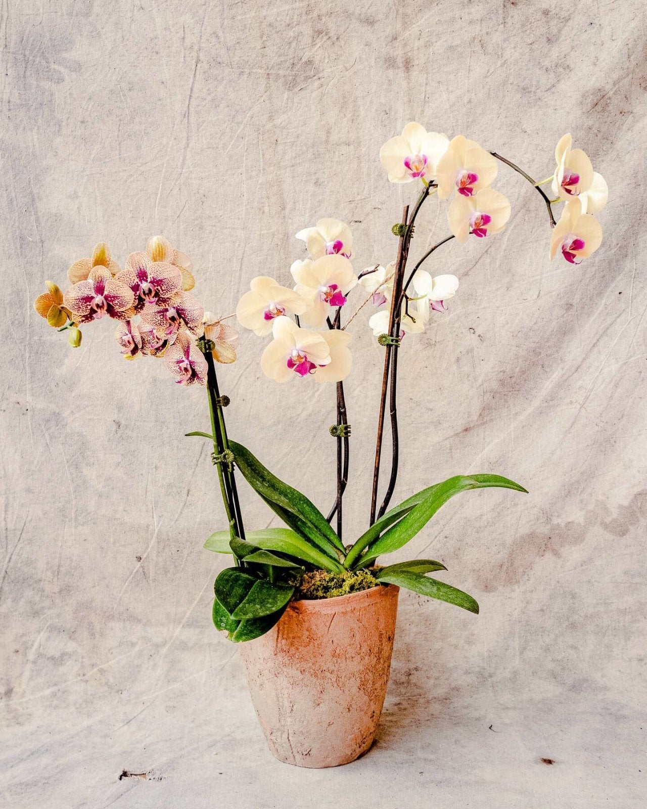 The Orchid Arrangement, Orchid Delivery, The Unlikely Florist