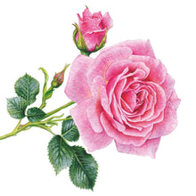 Load image into Gallery viewer, Rosedal Pink Rose Floral