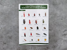Load image into Gallery viewer, A Guide to Common Insects in the Parks and Gardens of Singapore (Foldout Guide)