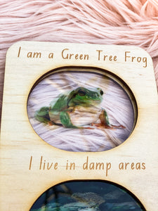 Ecosystem Information Boards - Green Tree Frog