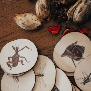 Wooden Bug Magnets by 5 Little Bears