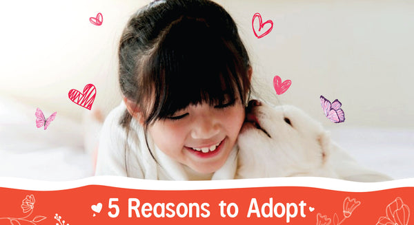 Top 5 Reasons Why You Should Adopt A Pet Instead of Buying