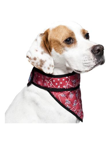 Aqua Coolkeeper Cooling Bandana For Dogs ( 4 Sizes ) | Waggymeal Online Pet Store Malaysia