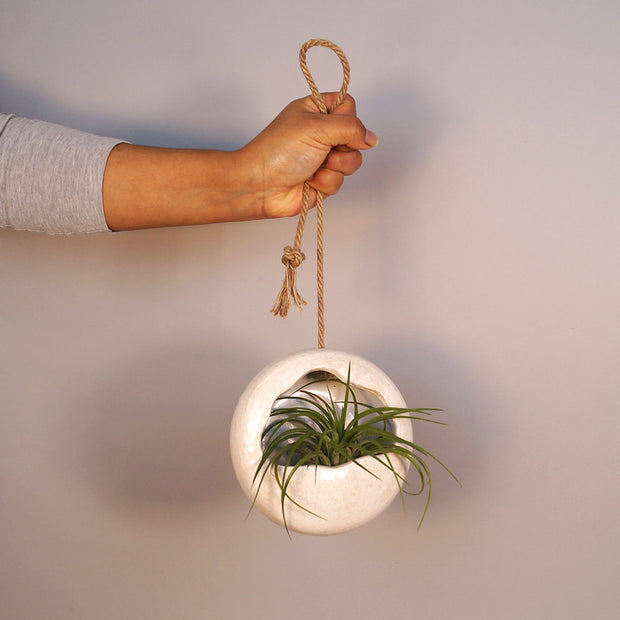 Hanging pot with air plant
