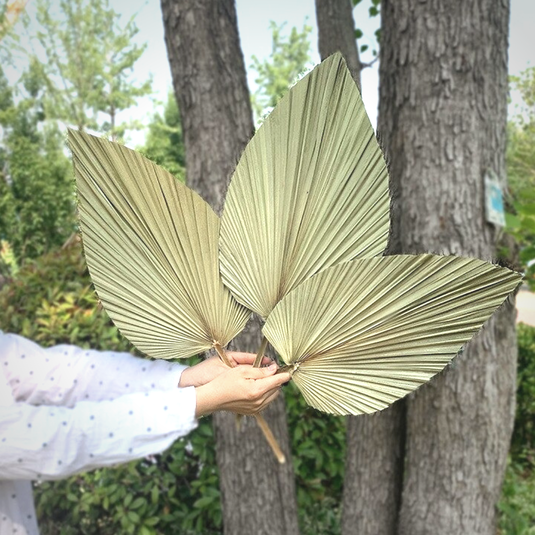 Rustic Dried Palm Leaf
