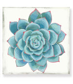 Load image into Gallery viewer, Pastel Succulent - Canvas Print - Osharey Framed Wall Art