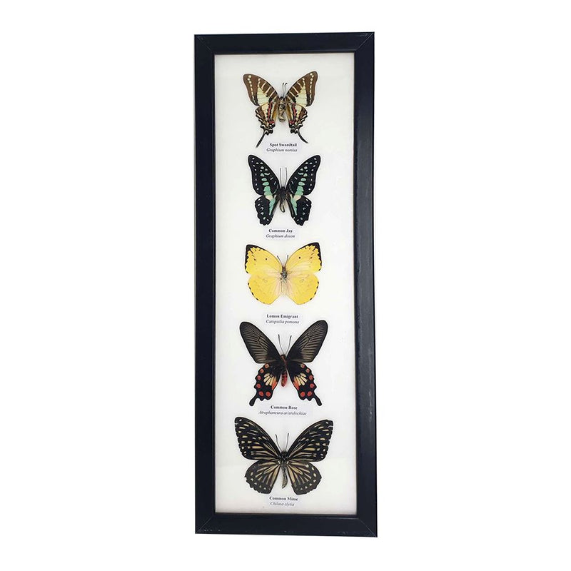 Framed Butterflys - 5