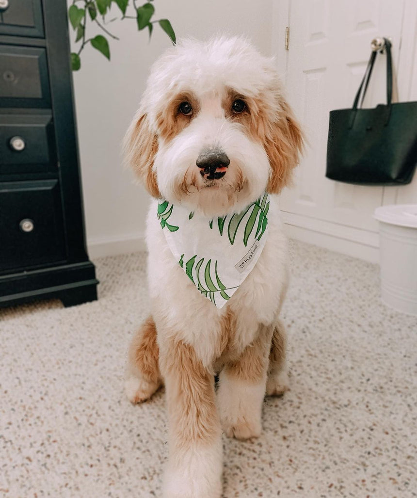 Palm Leaf Pattern Bandana