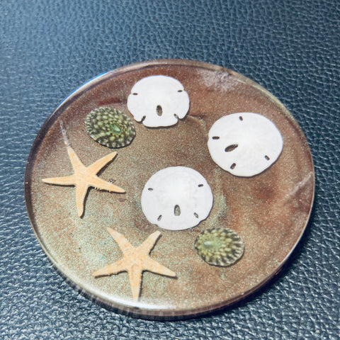 Sand Brown Coaster with various shells