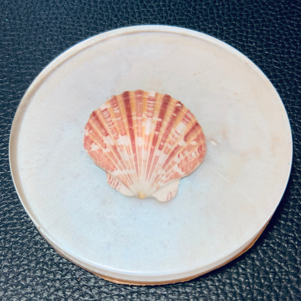 Pearl Coaster with SeaShell