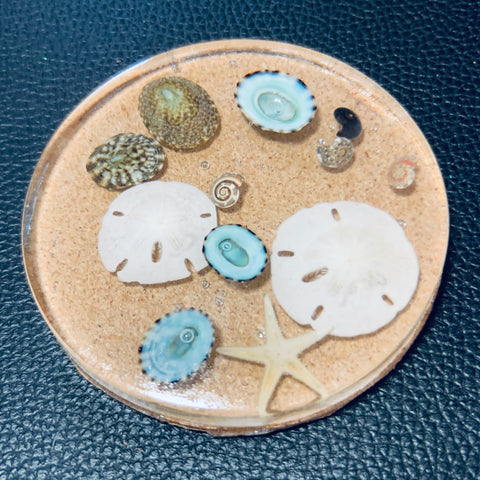 Clear Cork Coaster with Various Shells