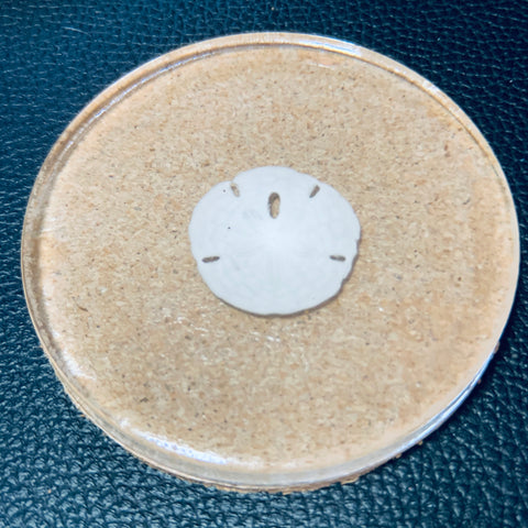Clear Cork Coater with Sand Dollar