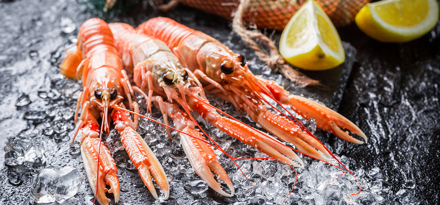 Langoustine Lobsters also known as Norway lobsters