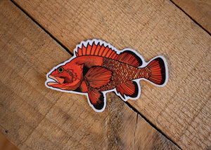 Orange Fish (rockfish)
